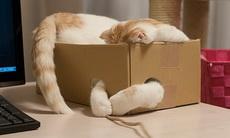 二货,不能给我换个大盒子么?