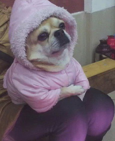 天冷了,要多加衣啊