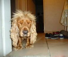 一觉醒来发型睡成小狮子了