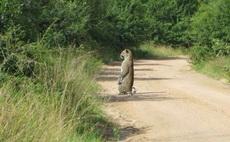 他忘记自己是一只豹子了