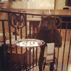 先生,这是您点的菜,请您过目!