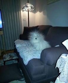 在沙发上睡了一晚,搞的一身的静电!