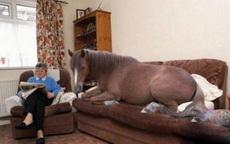 爱上一匹脱缰的野马,可是我家没有草原