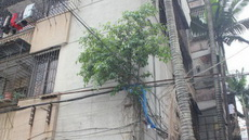 这树是怎么上去的?生命力也太顽强了吧?