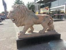 后面的小狮子你要不要这么怂啊!