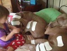 狗狗你是受伤了吗?