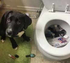 主人你这里漏水,我帮你堵住了!