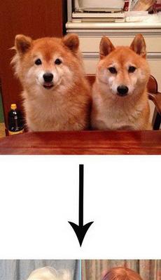 喵星人真是霸气!_动物图片_来福岛爆笑娱乐网