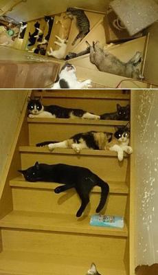 楼梯完全被喵星人承包了