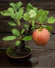 这苹果长得好给力