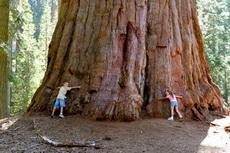 这颗大树的树龄是多少年