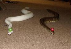 论如何让蛇变得可爱起来