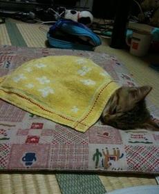 猫咪睡着了