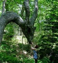 传说中的龙木