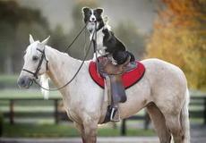 骑白马的不一定是王子!~也可能是汪星人!