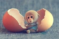 大师兄,你不是石头里蹦出来的么,咋从鸡蛋里面出来了