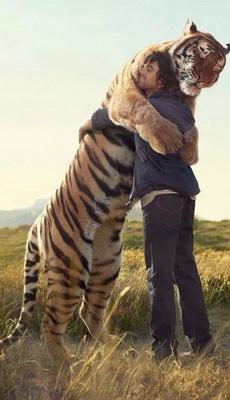 最凶猛的动物也有如此感人的