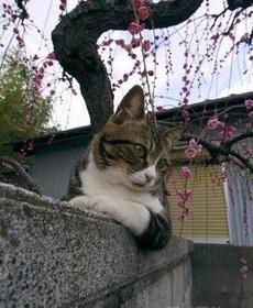 春色满园关不住