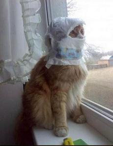 我养了一只忍者猫,每夜都彻夜不归