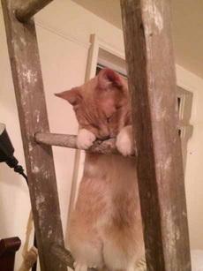 爬着爬着就睡着了