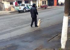 大爷您这遛狗方式真特别