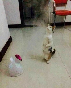 猫都开始蒸脸了…