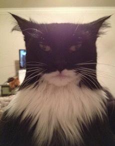 蝙蝠猫,简直太像了!!!