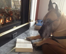 我怎么知道我在看什么,我只是一条狗