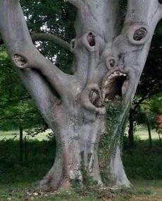 这棵树他吗的一生到底有多纠结啊