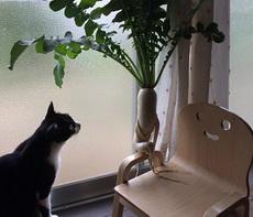 萝卜,你有啥不开心的事情,讲给我和凳子听听呗