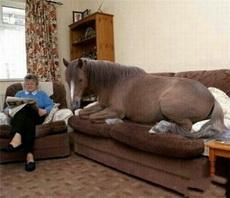 爱上一匹野马,可惜我的家里没有草原,这让我感到绝望~