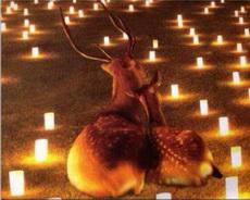 鹿星人也能这么浪漫