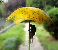 量身定做的雨伞啊