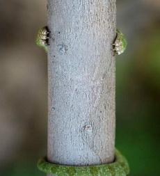 是谁藏在树后面?