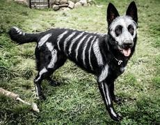 狗狗的纹身好酷啊