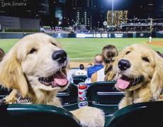 没事就不要打扰我们看球嘛!