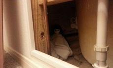 一位调皮的网友在搬家后,给下一位租户留下了一份小礼物,租户直接尿了