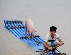 少年和他的pig的漂流记
