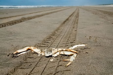 河蟹横行霸道的悲剧
