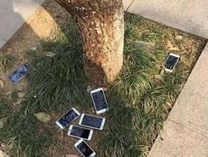 树上掉了好几个苹果