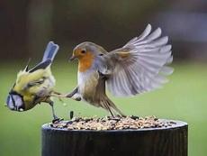不是什么好鸟