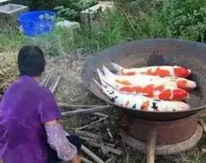 不知道这鱼味道怎么样,好吃不好吃