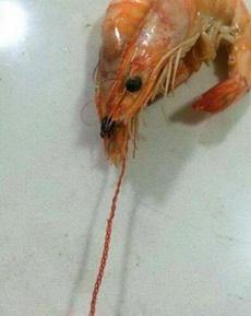 閑著沒事兒給蝦編個須
