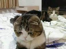 肾虚的老公在妻子面前抬不起头来