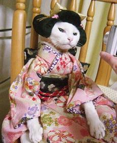 日本猫长这个样子吗