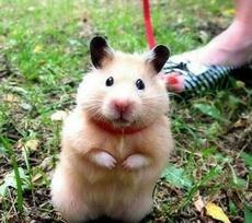 猫兄,我可不是老鼠