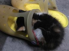 它怎么会那么喜欢霸占我的鞋