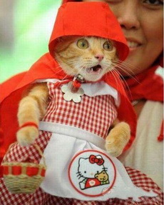 喵,小红帽这个扮相不适合我!