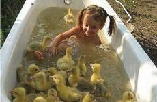回家一看熊孩子跑到给鸭子洗澡的池子里了