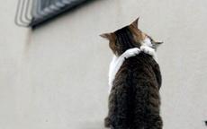 貓哥,妹真的喜歡你喲